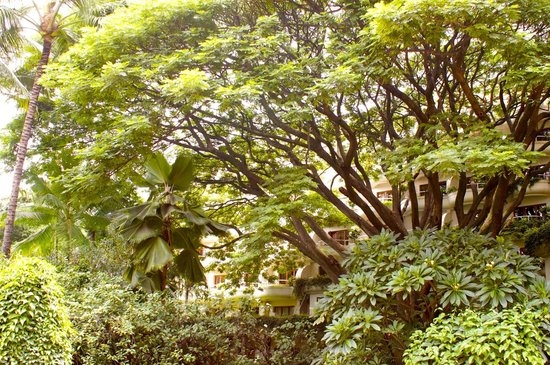 The Oberoi, Bengaluru : The Oberoi is built around the 120 year old tree.