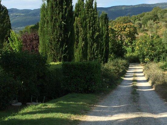 Villa di Piazzano : surronding