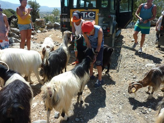 Safari Club Crete: A stop to feed the goats