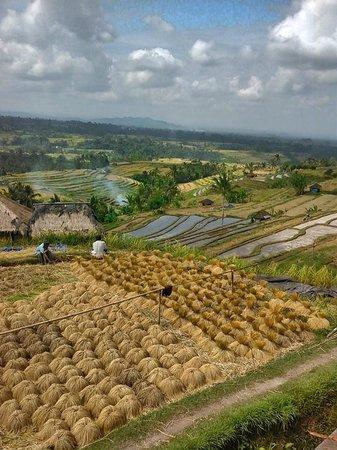 Jatiluwih Green Land: Nice view at jati luwih bali