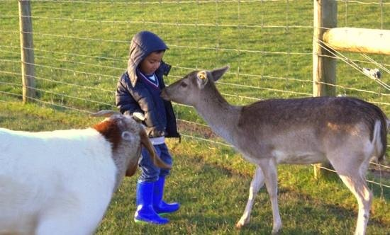 Dusky Ridges - Te Anau farmstay Bed and Breakfast: ourson and Phoebe.