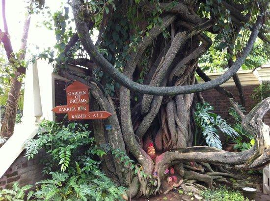 Garden of Dreams : old tree