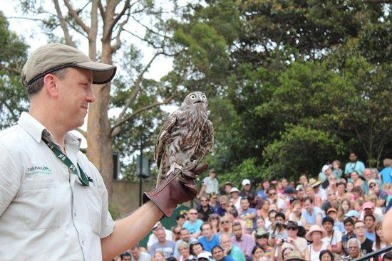 Taronga Zoo: Free Flight Display