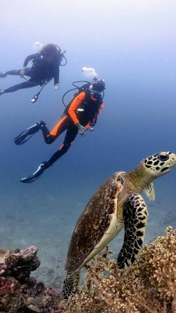 Merlin Divers - Kamala Diving Center: My dive buddy and I with a turtle at Shark Point!