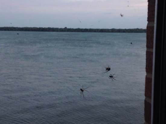 Sheraton Erie Bayfront Hotel: Woke up to my deluxe lake view of spiders in room 512.