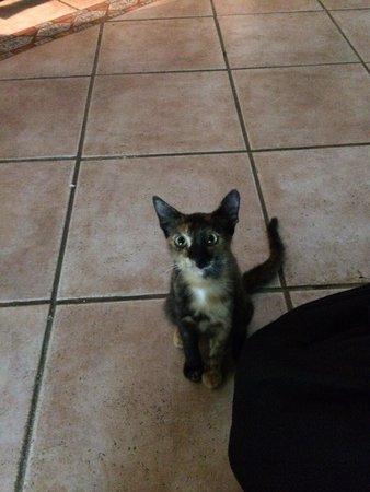Hotel Arischa: Des chats attentifs
