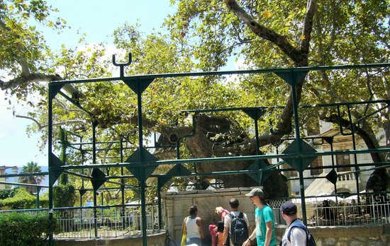 Hippocrates Tree: Платан Гиппократа
