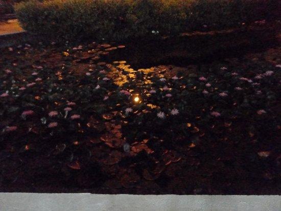 أوبيرج سيرافين: Night view of Lily Pond