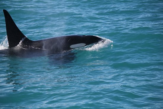 Whale Watch: They were less than 30 feet from the boat.