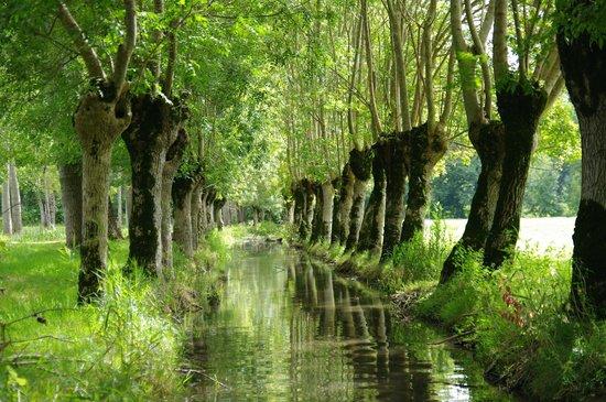 Embarcadere Cardinaud - Marais poitevin