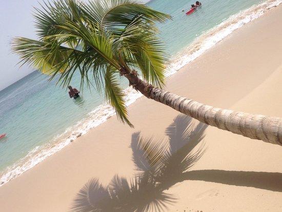 Luxury Bahia Principe Cayo Levantado Don Pablo Collection: Quiet beach