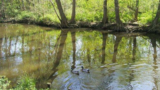Parc de Majolan : Majollan et ses canards