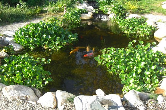 The Seafarer Inn: Relax by the koi pond with triple waterfall