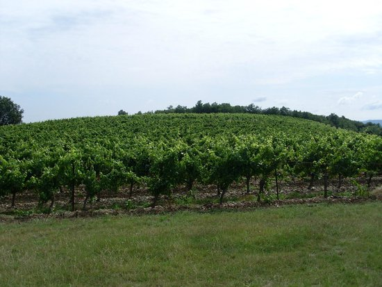 Maison Laurent: Wine tasting and tour at Rives-Blanques
