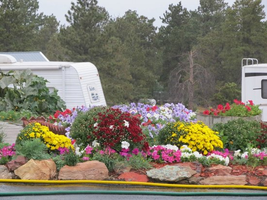 Pine Haven, WY: Flowers planted each year