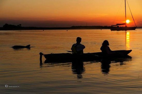 Amelia Island Kayak Excursions: Dolphin Sighting on our Amelia River Sunset Tour
