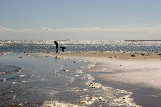 Coquet Cottages: Our children on Alnmouth Beach