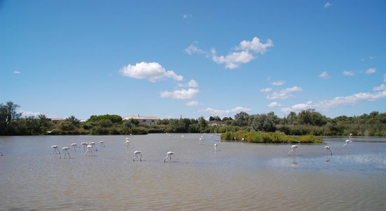 Le Parc Ornithologique de Pont de Gau : Parc Ornithologique