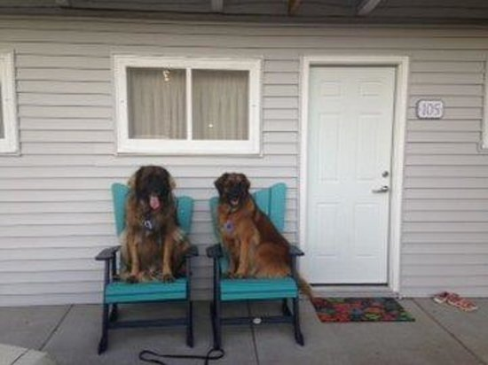 Beachfront Inn : four legged guests