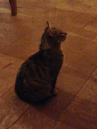 Podere Il Casale: Polite kitten waiting for scraps