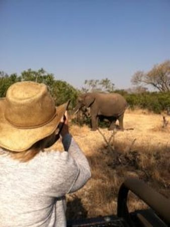 Idube Game Reserve: Elephant Encounter