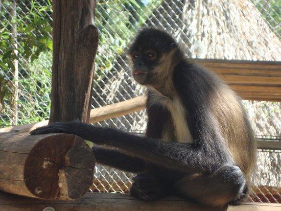 Hotel Hacienda Uxmal Plantation & Museum : Monkey