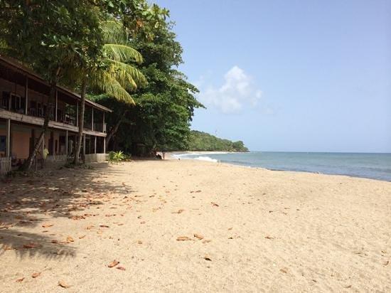 Mt Plaisir Estate Hotel : beach