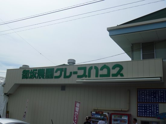 Misaka Farm Grape House