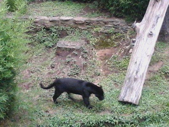La Aurora Zoo: 1