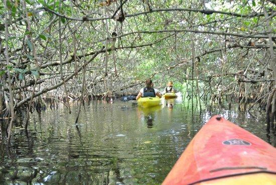Everglades Rentals & Eco Adventures: Mangroventunnel Everglades