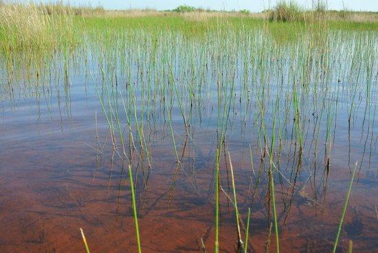 Everglades Rentals & Eco Adventures: Grasland Everglades