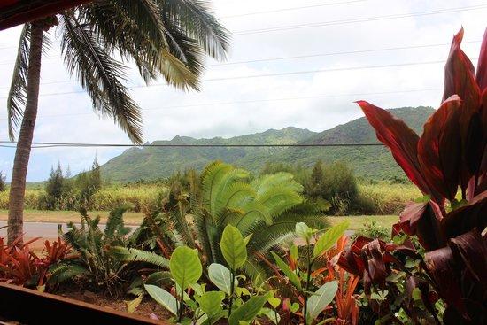 Moloaa Sunrise Fruit Stand: view