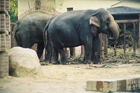Zoologischer Garten Leipzig: Elefanten