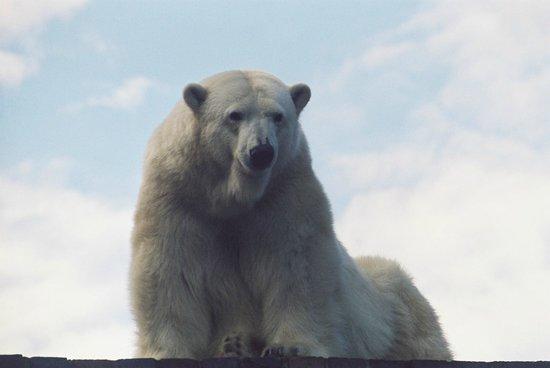 Zoologischer Garten Leipzig: Eisbär