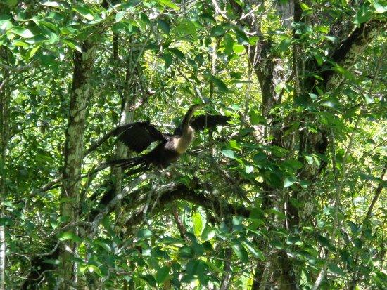 Corkscrew Swamp Sanctuary: Bird life