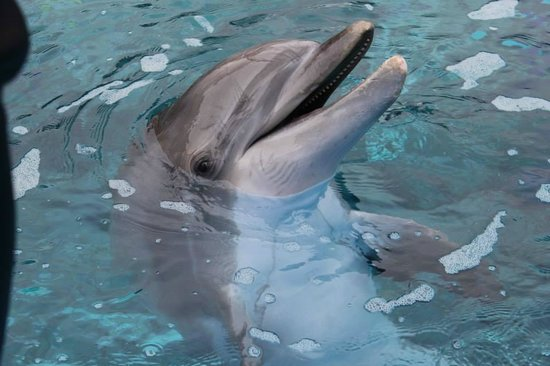 Siegfried & Roy's Secret Garden and Dolphin Habitat: Dolphin at the zoo