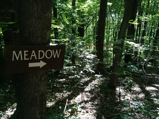 Kentuck Knob: Through the woods to the sculpture meadow.