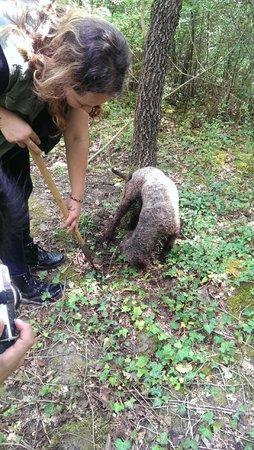 The Truffle Hunter: Hunting in progress