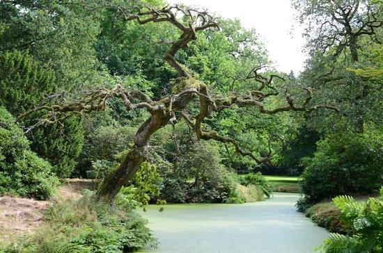 Schlosspark Lütetsburg: Lütetsburger Park Baum