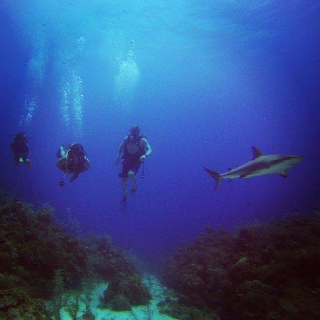 Felipe Diving Center: Diving with black tip reef sharks