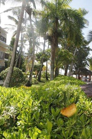 Viva Wyndham Dominicus Beach: giardini