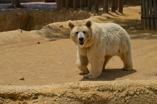 Oasys MiniHollywood : зоопарк