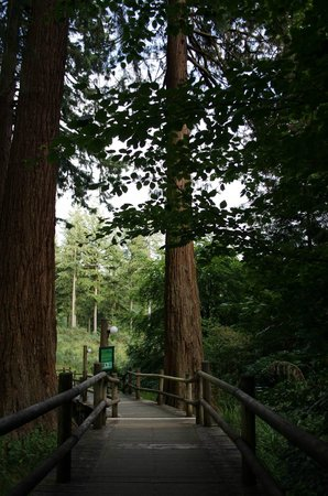 Center Parcs Longleat Forest: Giant Redwood forest