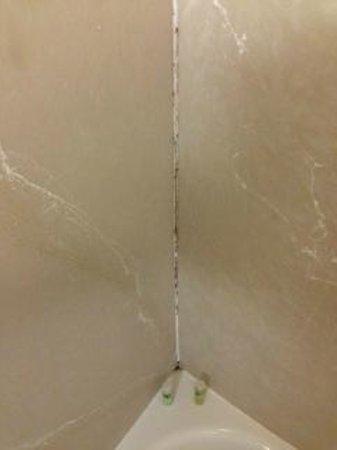 Holiday Inn Express Hershey (Harrisburg Area) : Moldy Shower