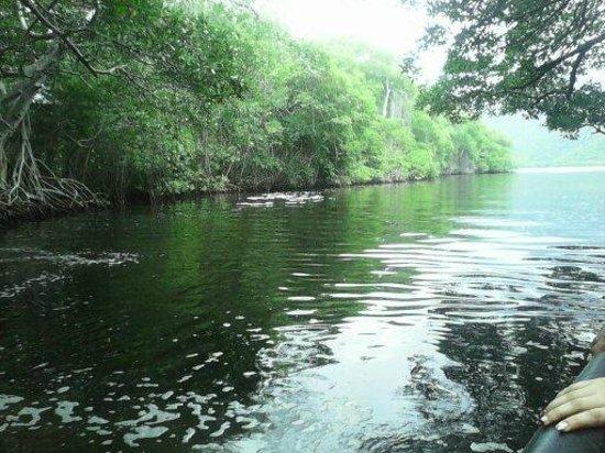 Venezuela: manglares y paseos