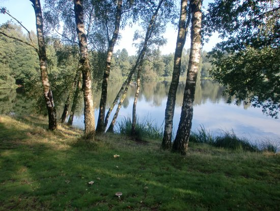 Center Parcs Het Meerdal: View from the cottage