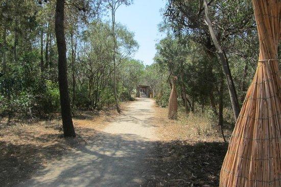 Villaggio Turistico Akiris: дорога на пляж (100м через сосновую рощу)
