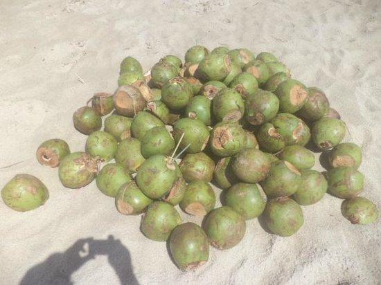Praia de Futuro : Muitos cocos na areia