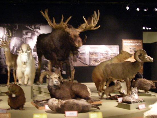 Real Museo BC: animals