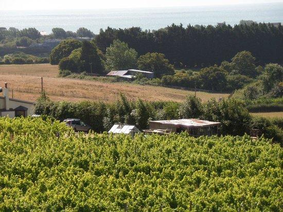 Adgestone Vineyard: 2